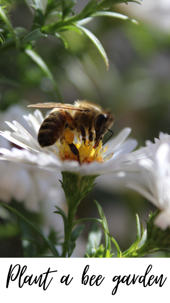 How to help the bees by planting wild flowers
